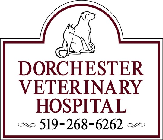 Dorchester Veterinary Hospital